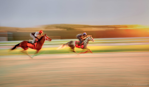 horses horseracing racetrack training sunrise competition speed fast intensity race panning