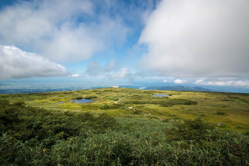 月山の湿原