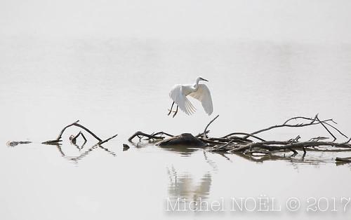 Michel NOËL © 2017-7332.jpg