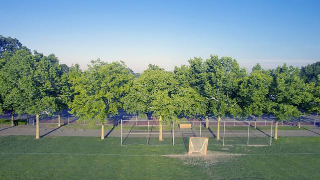 Tree Galore