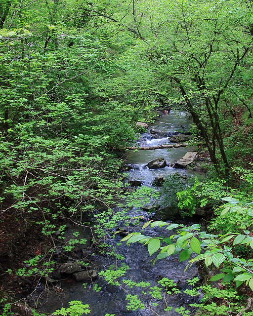 Cossatot River Tributary, Cossatot River State Pary - Polk County in Southwest Arkansas