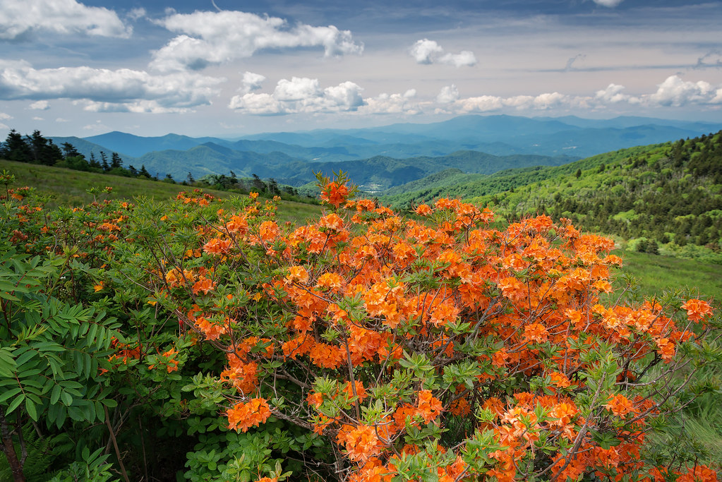 Roan Mountain (North Carolina-Tennessee State Line) | Flickr