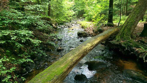 log htc water trees brook rural forest stream