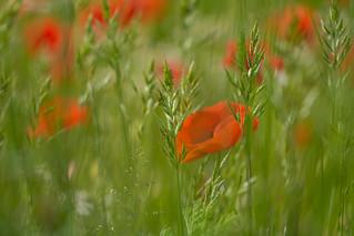 Summer field | by Infomastern