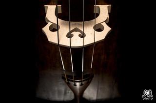 Teschio del Violino