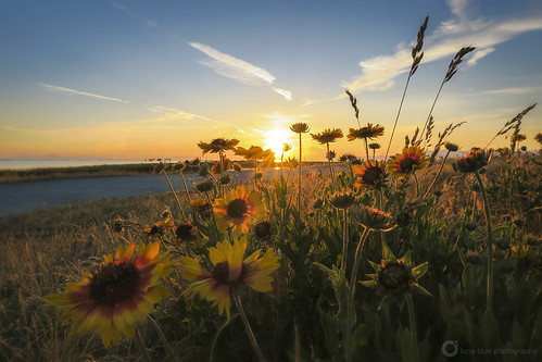 richmond steveston britishcolumbia wildflowers sunset summer canada garrypointpark sun sunlight fraserriver sundown