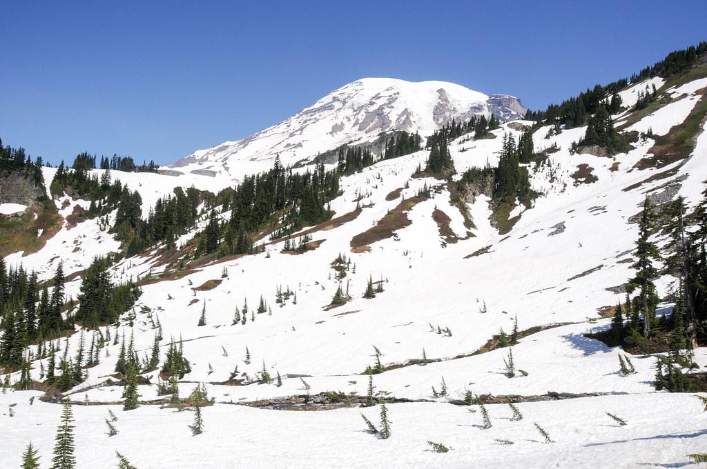 Paradise snow field