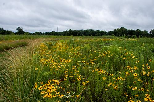 ballardnaturecenter wildflower places summer