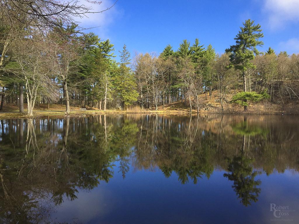 Springtime Reflections at Pine Banks Pond
