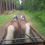 Mit der Kutsche durch den Colditzer Forst