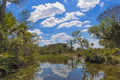 Last everglades landscape | by Tambako the Jaguar