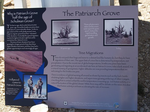 020 Sign at the Patriarch Grove showing that there are many new trees recently | by _JFR_