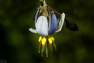 Flor | by erickdelima