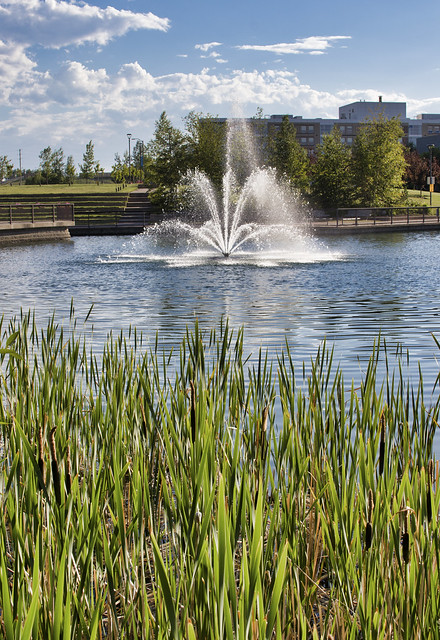 MRU Summer fountain