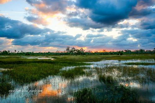 marsh water sun sunrise clouds cloudy sky weather landscape reflection reflect pineglades naturalarea pinegladesnaturalarea jupiter florida usa outdoors greatoutdoors grass