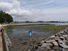 2017/06/24 (土) - 9:16 - ちょうど大潮の日で、大勢がアサリとりに来ていた