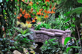 Victoria Butterfly Gardens, Butterfly Gardens, Brentwood Bay, Victoria, Vancouver Island, BC, British Columbia | by BCVacation
