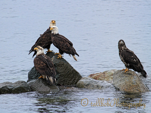 The Eagles are Rock Stars