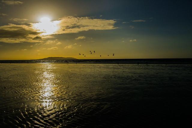 Birdy Beach