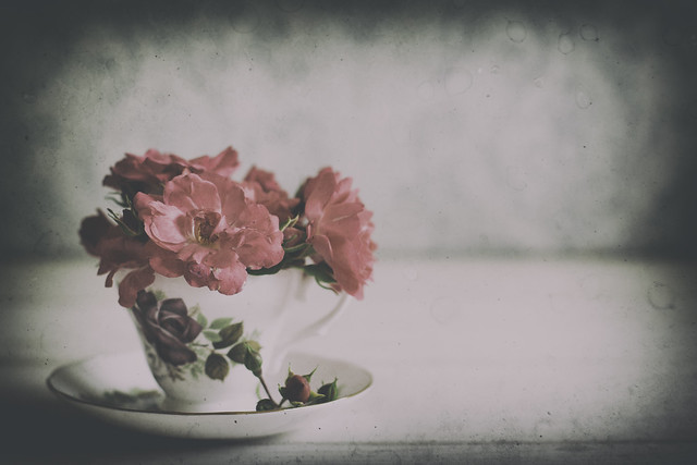 20/52: A nice cup of rosy... [Explored]