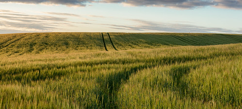 field golden sunrise fife scotland nikon d7200 sigma350mmf14