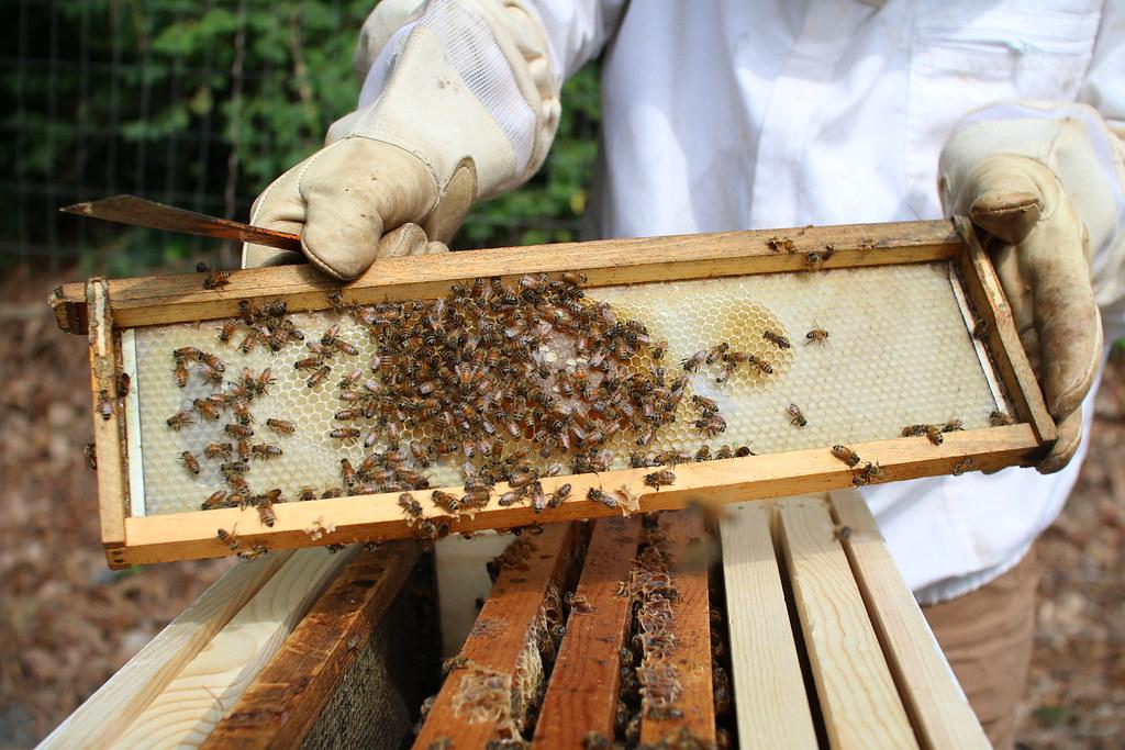 UR honeybee hives