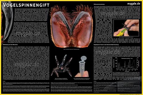 Vogelspinnengift Poster v2 | by mygale.de