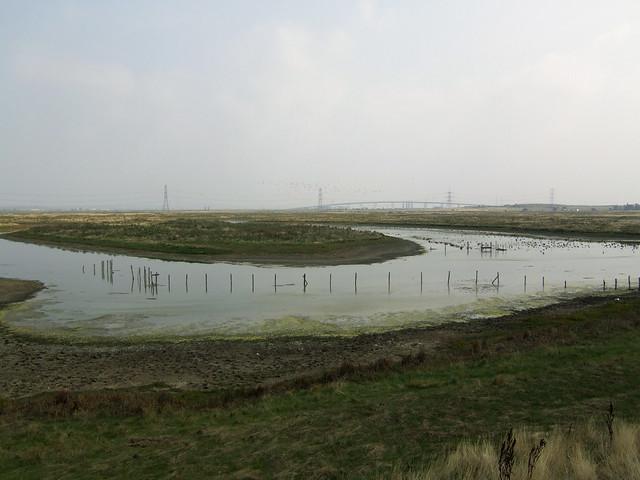 Marshes near Iwade