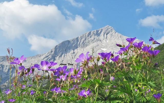 Alpspitze 2628 m  ,  Garmisch Partenkirchen