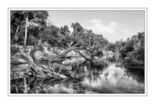 econlockhatchee river seminole county florida orlando wild natural big little econ state forest equestrian trail hiking sony a6300 1018mm uprooted trees flooding monochrome landscape