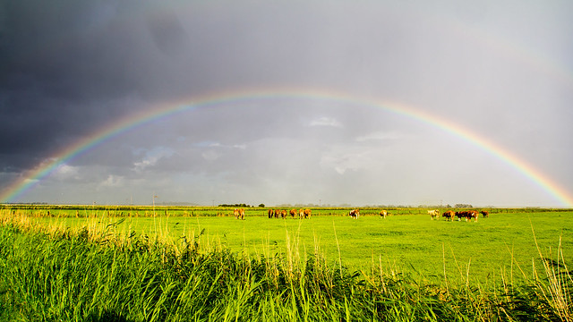 Cows & Rainbow, Föhr, Germany [2010]