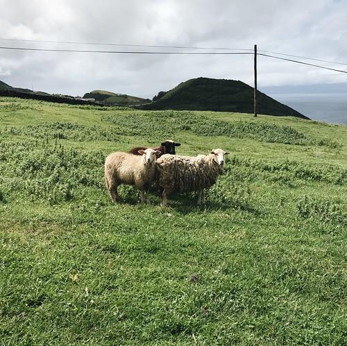 ovelhas   by Rosa Pomar