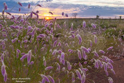 Great Sandy Desert sunrise.