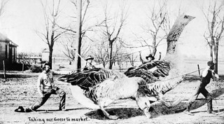 """""""Taking our geese to market"""" / « Nous emmenons nos oies au marché »"""