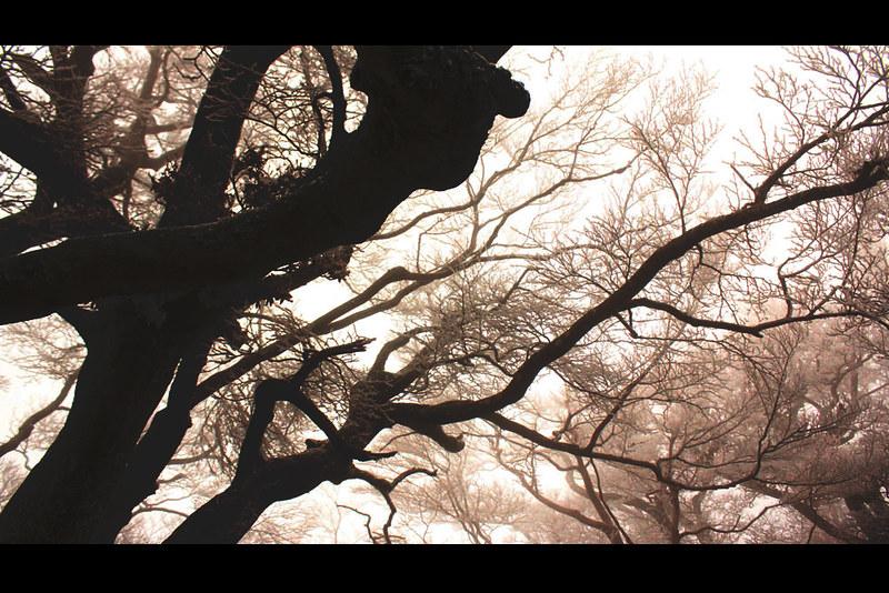 天城山_2012_0002
