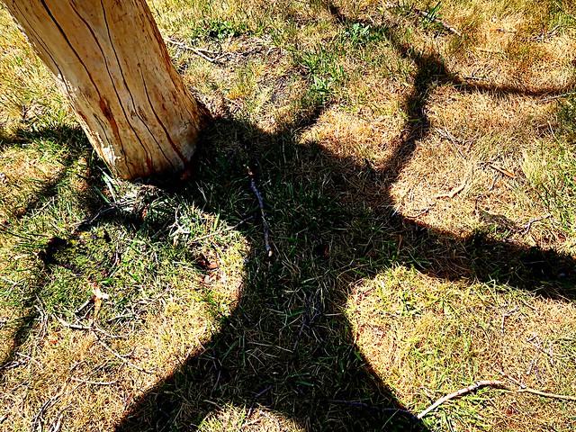 1 Dead Tree Two