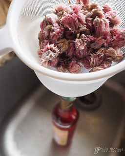 Chive Blossom Vinegar | by gapey