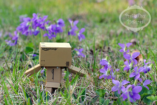 Danbo & violets back-to sm | by Alliecat09