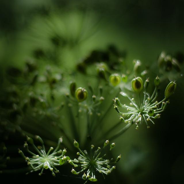 Summer Wildflowers 042