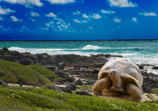 Large turtle at the sea edge on background of tropical landscape