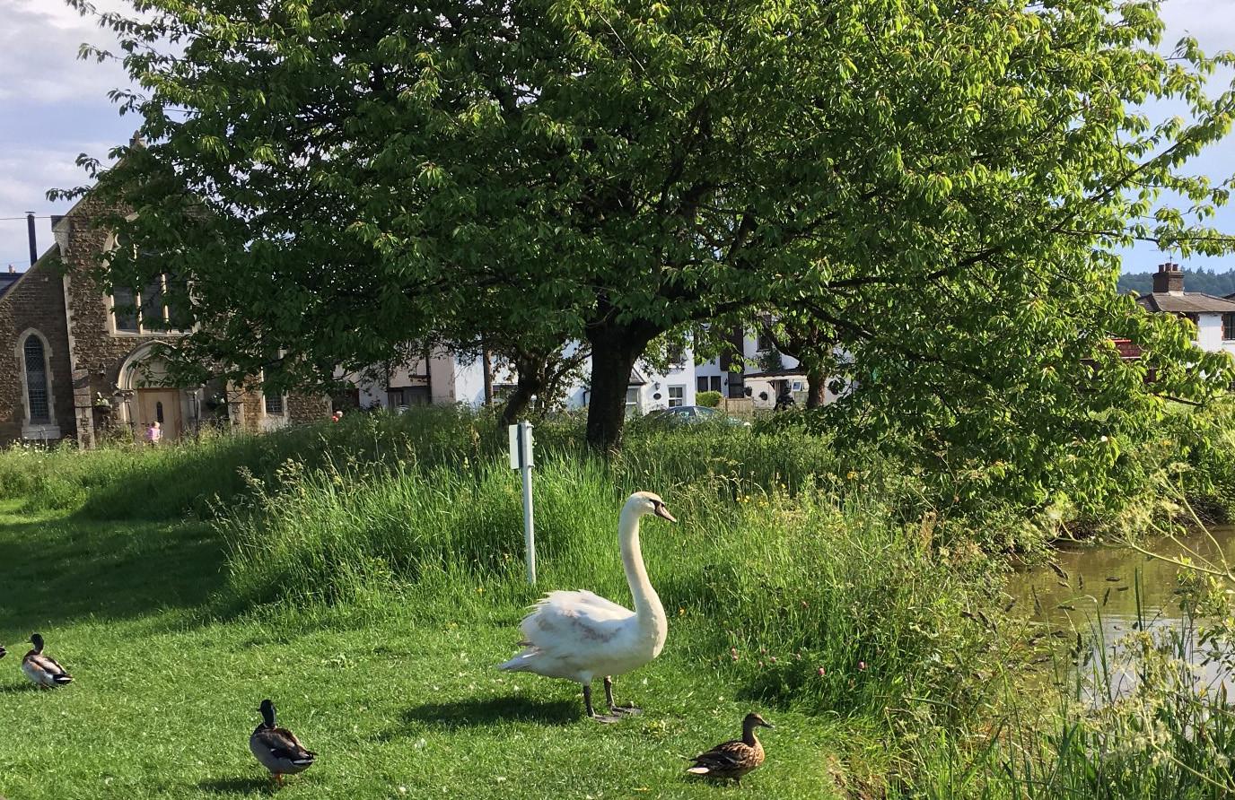 Shalford Pond