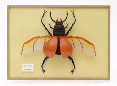 Stag Beetle by Grant Davis.
