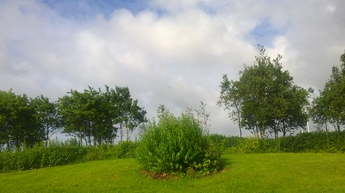 lumia1020 cameraphone green sky trees
