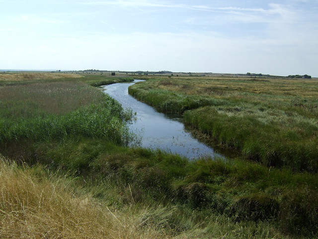 Harty Marshes, Isle of Sheppey
