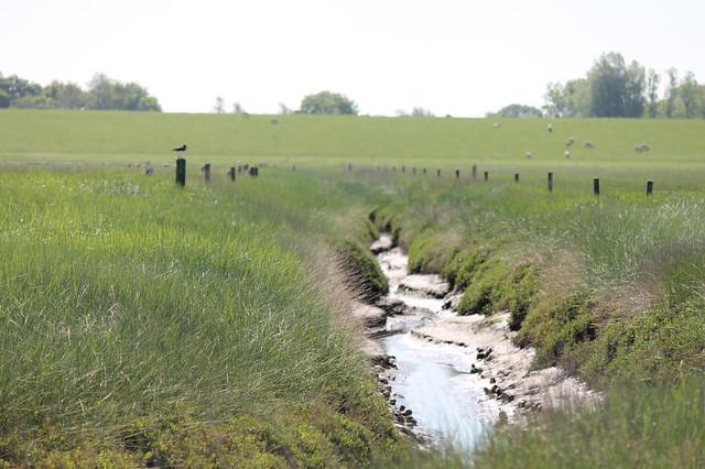 Graben im Schwimmenden Moor