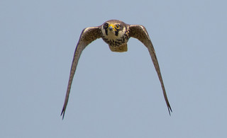 Hobby | by cogs2011