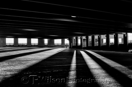 Peeking Through | by TAWilsonPhotography