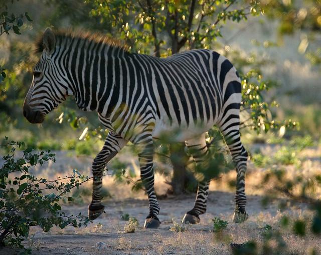 DSC07013 - NAMIBIA 2017