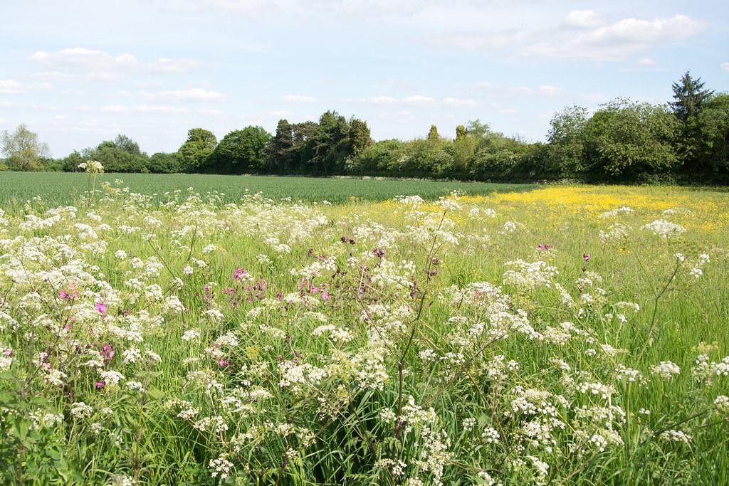 Spring Meadow Princes Risborough to Great Missenden