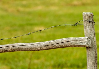 Fence & Barbed Wire | by Karen_Chappell